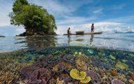 Laut berperan penting dalam melawan pemanasan global dengan menyerap sekitar 93 persen karbon dioksida yang dihasilkan akibat aktivitas manusia.