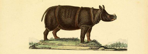 javanese-rhino-drawing-biodiversity-heritage-library-flickr