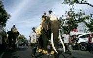Gajah sumatera yang merupakan bagian dari kehidupan manusia. Dahulunya, mamalia besar ini begitu dihormati dan mendapat tempat terhormat, baik sebagai penyambut tamu hingga sebagai pasukan perang. Mengapa sekarang dibunuh? Foto: Junaidi Hanafiah